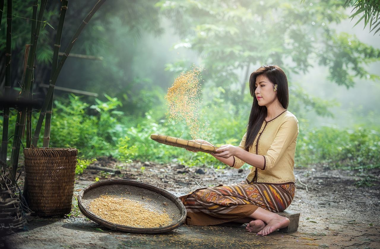 rice-1807554_1280